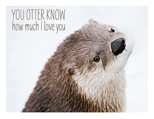Valentine Card You Otter Know Nature Photography