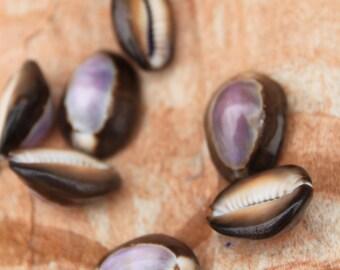 Purple Top Cowry Cowrie Shells- brown cowry- cowrie shells, Tahitian costume, Polynesian jewelry