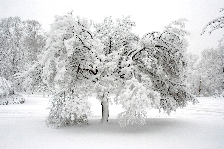 Minnesota winter landscape photography. Monochrome. Snow