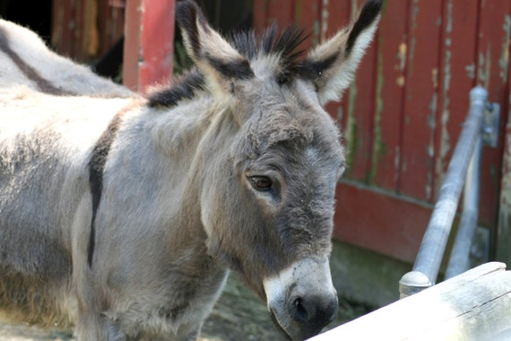 Donkey stock photo image free use