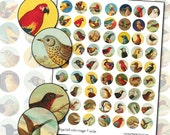 Antique Bird Owl digital collage sheet in 1 inch circles 25mm round canary finch robin bluebird