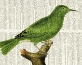 bird print II