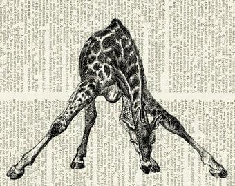 giraffe print on blog