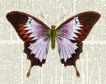 butterfly - violet lavender print