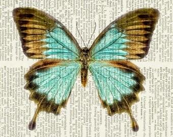 butterfly, aqua blue brown print