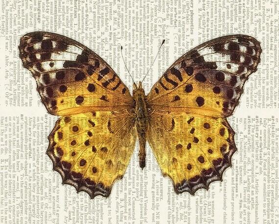 butterfly, golden brown print