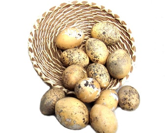 Egg Gourds Baker's Dozen Organically Grown Primitive Prim Bowl Filler Nature Craft Supply Easter Decoration Woodsy Easter Egg Decor Rustic