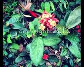 5x5 Fine Art Photograph - Tropical Butterfly -  Instagram photo