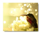 Tiny Love Sleeping Hummingbird Forest Scene Woodland Magical Bokeh Bird Photograph Home Decor Natural History