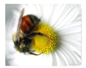 Bee On A Flower Photograph Bee On Flower Print