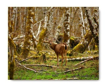 Deer In The Hoh Rainforest Deer Print Affordable Home Photography Prints Nature Photography Decor Nature Lover Woodland Scene Deer