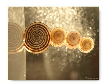 Sundial Shells Balancing Act Photograph...Affordable Photography Art Sea Ocean Decor Seashell Beach Decor Architectonica Perspectiva