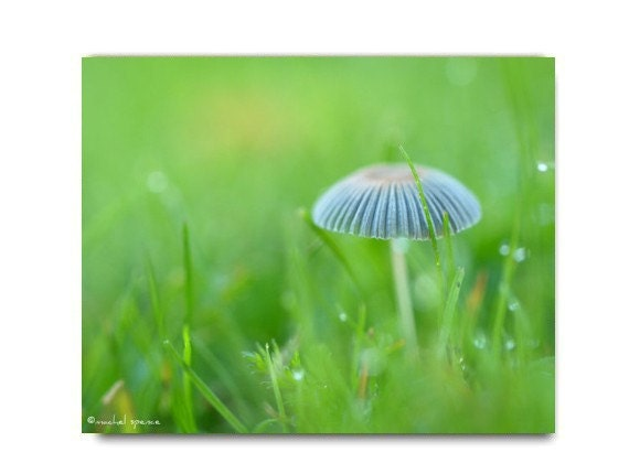 Mushroom Photo Print Fungi Print Woodland Forest Photograph Green Grass Mycology Fungi Print Magical Forest