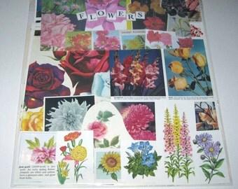 Flower Ephemera Pack of 65 Pieces of Vintage Ephemera for Altered Art