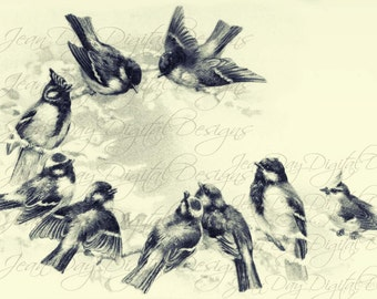 French Birds, Early Morning Meeting, Black/Ivory, 9 birds from 1904, Instant Download, French Postcard FrA164