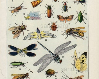Vintage French Double Sided Chart of Insects Les Insectes Adolphe Millot Larousse Illustre