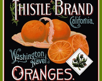 Thistle Washington Oranges  Refrigerator Magnet - FREE US SHIPPING