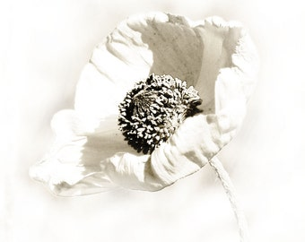Poppy Flower Black White Photograph Minimalist Dreamy Wedding Decor
