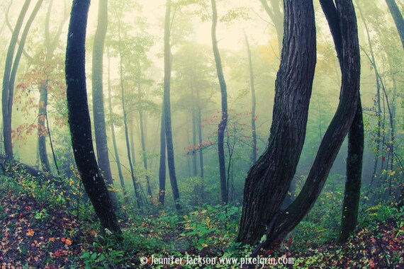 "Nature Photography  - Large Format Landscape Photograph 20 x 30"" - Fine Art Home Decor by Jennifer Jackson"