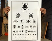 Beetle Optometry Poster Eye Chart Insect collection Bugs