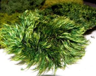"""Mood Moss-Preserved Moss Samples-Sheet moss-You choose Moss type-Mood Moss-Fern Moss- 4""""x6"""" bag"""