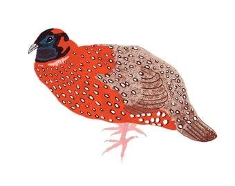 Pheasant 5x7 Print