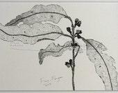 GUMLEAVES Nature Illustration ORIGINAL Matted Botanical Drawing Australian Art Black & White pen ink zen mindfulness