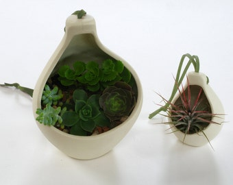 Giant Clove Hanging Planter - great for airplants & succulents