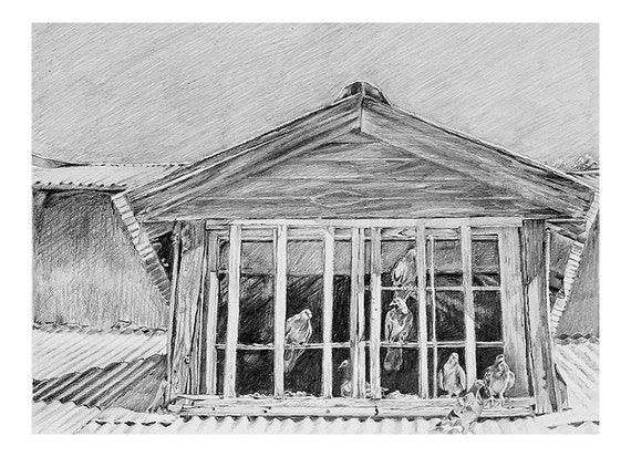 realistic window drawing. items similar to birds reproduction print, pencil drawing 8x10- black white gray, realistic art on etsy window w