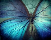 BUTTERFLY BLUE Abstract Color Original Art Photograph
