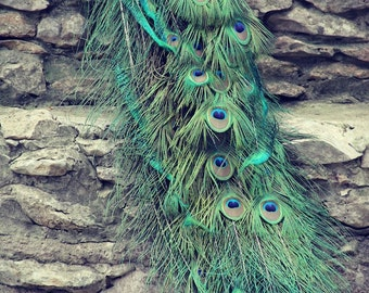 PEACOCK TAIL FEATHERS Original Color Art Photograph