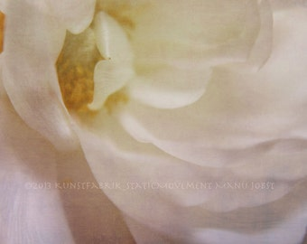 RANUNCULUS White Soft Original Color Art Macro Photograph