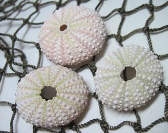 Mini Sea Urchins Light Pink urchins Beach Seashells Decor 944