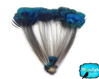 Corona Peacock Feathers, 1 Bunch - BLUE Iridescent Peacock Whole Crown Feather : 2321