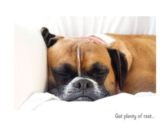 Boxer Dog Get Well Greeting Card - Boxer Dog Photo Card - Boxer Dog Well Wishes Card