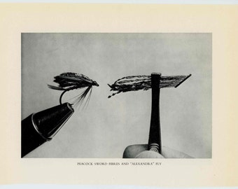 1970 peacock feathers & alexandra fly fishing lures plugs flies original vintage fish print