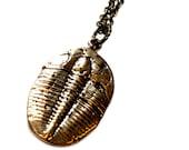 Trilobite Fossil Necklace