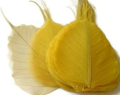 One Dozen Large Canary Yellow Skeleton Leaves Great for Corsages, Hair Clips, Paper Crafts