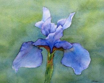 violet iris on green archival print of original watercolor