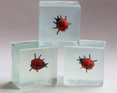 Glycerin Lady Bug Soap for Holidays and Birthday Gifts. Insects. Etymology.
