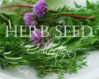Herb Seeds, Organic Herb Seed Collection
