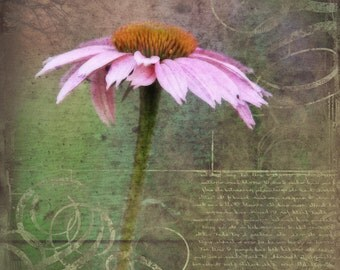 Flower art, pink flower photo, Pink Daisy, Nature photography, Altered art print