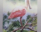 Spoonbill on a Limb ACEO watercolor print 542 watercolorsNmore pink Florida shorebirds