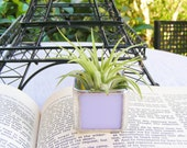 Lavender Opal Stained Glass Tillandsia Air Plant Holder (airplant included)
