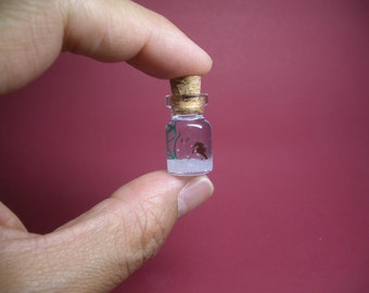 Tiny seahorse and babies in a tiny bottle