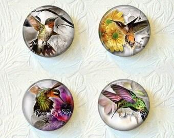 Magnet Set  Hummingbirds  Buy 3 Get 1 Free  211-MS