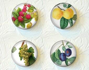 Magnet Vintage Pictures of Fruits Set of Fruit  Magnets 1.5 inch  Buy 3 Get 1 Free 313M