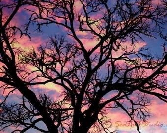 Dream a Little Dream : sunset photo dusk silhouette tree landscape photography sky blue pink clouds home decor 8x12 12x18 16x24 20x30 24x36