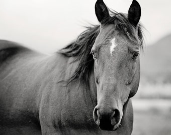 Black and White Horse Portrait, Horse Photography, Equine Art, Animal Wall Art
