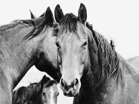 Amazing large western horse art in black and white x horse photograph big horse wall